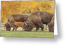 Bison Family Nation Greeting Card