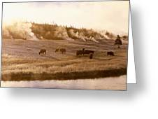 Bison Firehole River Yellowstone Greeting Card