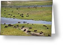 Bison Herd And Yellowstone River Greeting Card
