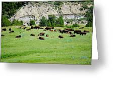 Bison Herd II Greeting Card