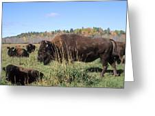 Bison Home On The Range Greeting Card