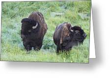 Bison In Love Iv Greeting Card