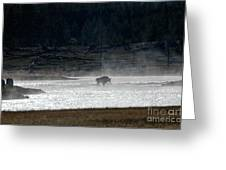 Bison In The River Greeting Card