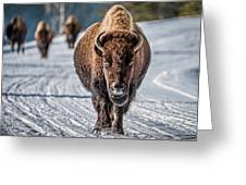 Bison In The Road - Yellowstone Greeting Card