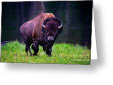 Bison Of Yellowstone Greeting Card