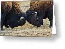 Bison Push And Shove Greeting Card