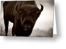 Bison Showdown Greeting Card