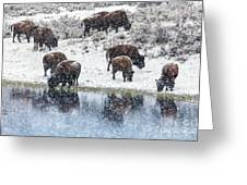 Bison Snow Reflecton Greeting Card
