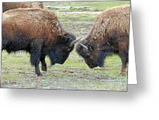 Bison Standoff Greeting Card