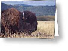 Bison Strength Greeting Card