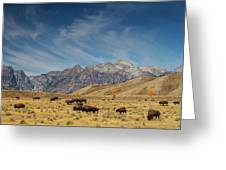 Bison The National Mammal Greeting Card