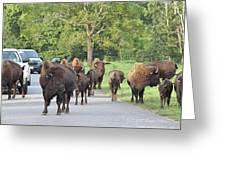 Bison Traffic Jam Greeting Card