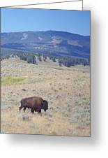 Bison Trail Greeting Card