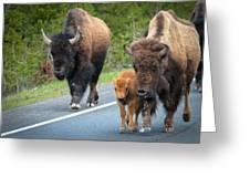 Bison Walking Greeting Card