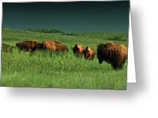 Bisons In The Prarie Greeting Card