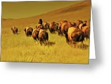 Bisons Greeting Card