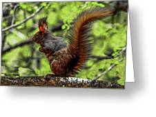 Black Abert's Squirrel - Half And Half Greeting Card