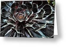 Black Aeonium Greeting Card