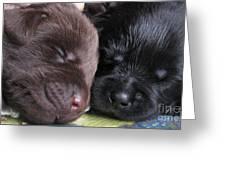 Black And Chocolat Greeting Card