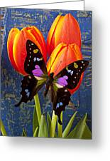 Black And Pink Butterfly Greeting Card