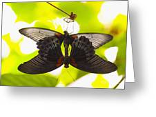 Black And Red Butterflies Greeting Card