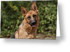 Black And Red German Shepherd Dog Greeting Card