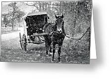 Black And White Amish Buggy Greeting Card