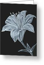 Black And White Asiatic Lily Greeting Card