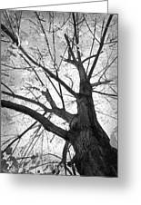 Black And White Autumn Tree  Greeting Card