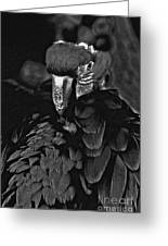 Black And White Bad Ass Bird Greeting Card
