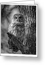 Black And White Barred Owl Greeting Card