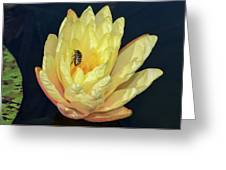 Black And White Beetle On Yellow Pond Lily Greeting Card
