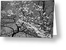 Black And White Blossoms Greeting Card