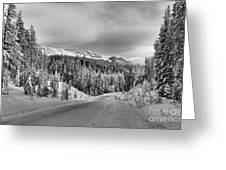Black And White Bow Valley Parkway - Winter Greeting Card