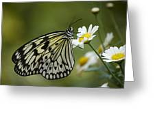 Black And White Butterfly On A Daisy Greeting Card