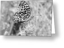 Black And White Butterfly On Clover Greeting Card