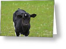 Black And White Calf Standing In A Field Greeting Card