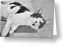 Black And White Cat Lounging Greeting Card