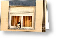 Black And White Cat On The Windowsill Greeting Card