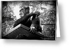 Black And White Chimpanzee Greeting Card