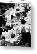 Black And White Coneflowers Greeting Card