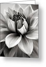 Black And White Dahlia Greeting Card