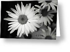 Black And White Daisy 1 Greeting Card