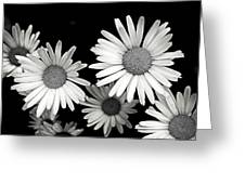 Black And White Daisy 2 Greeting Card