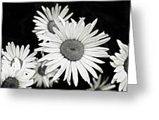 Black And White Daisy 3 Greeting Card