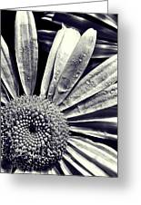 Black And White Daisy  Greeting Card