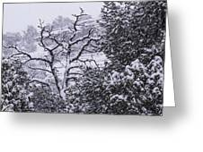 Black And White Day Greeting Card