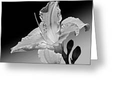 Black And White Daylily Greeting Card