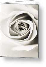 Black And White Delight Greeting Card