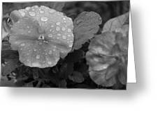 Black And White Dewy Pansy 1 Greeting Card